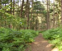 A60 woodland dog walk, Nottinghamshire - Dog walks in Nottinghamshire