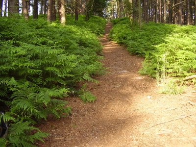 A60 woodland dog walk, Nottinghamshire - Driving with Dogs
