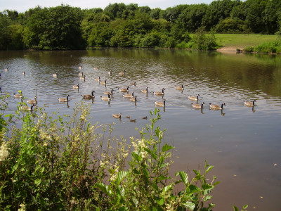 Lakes dog walk in historic park, Nottinghamshire - Driving with Dogs