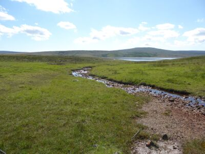 A689 Remote dog walk and reservoir nature trail, County Durham - Driving with Dogs