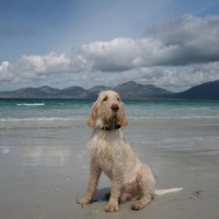 Dog-friendly beach on the Isle of Harris, Scotland - Dog walks in Scotland