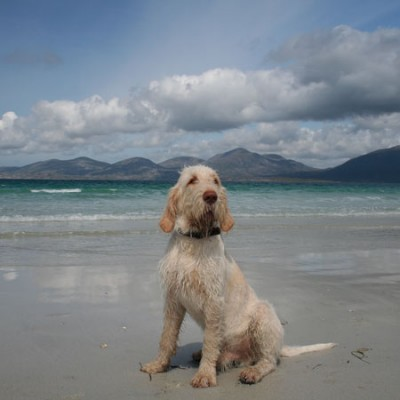 Dog-friendly beach on the Isle of Harris, Scotland - Driving with Dogs