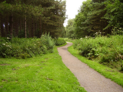 A60 Woodland dog walks, near Kirkby, Nottinghamshire - Driving with Dogs