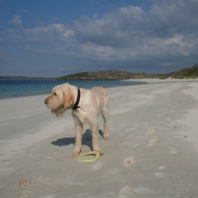 Traigh na Beirigh dog-friendly beach on the Isle of Lewis, Scotland - Driving with Dogs