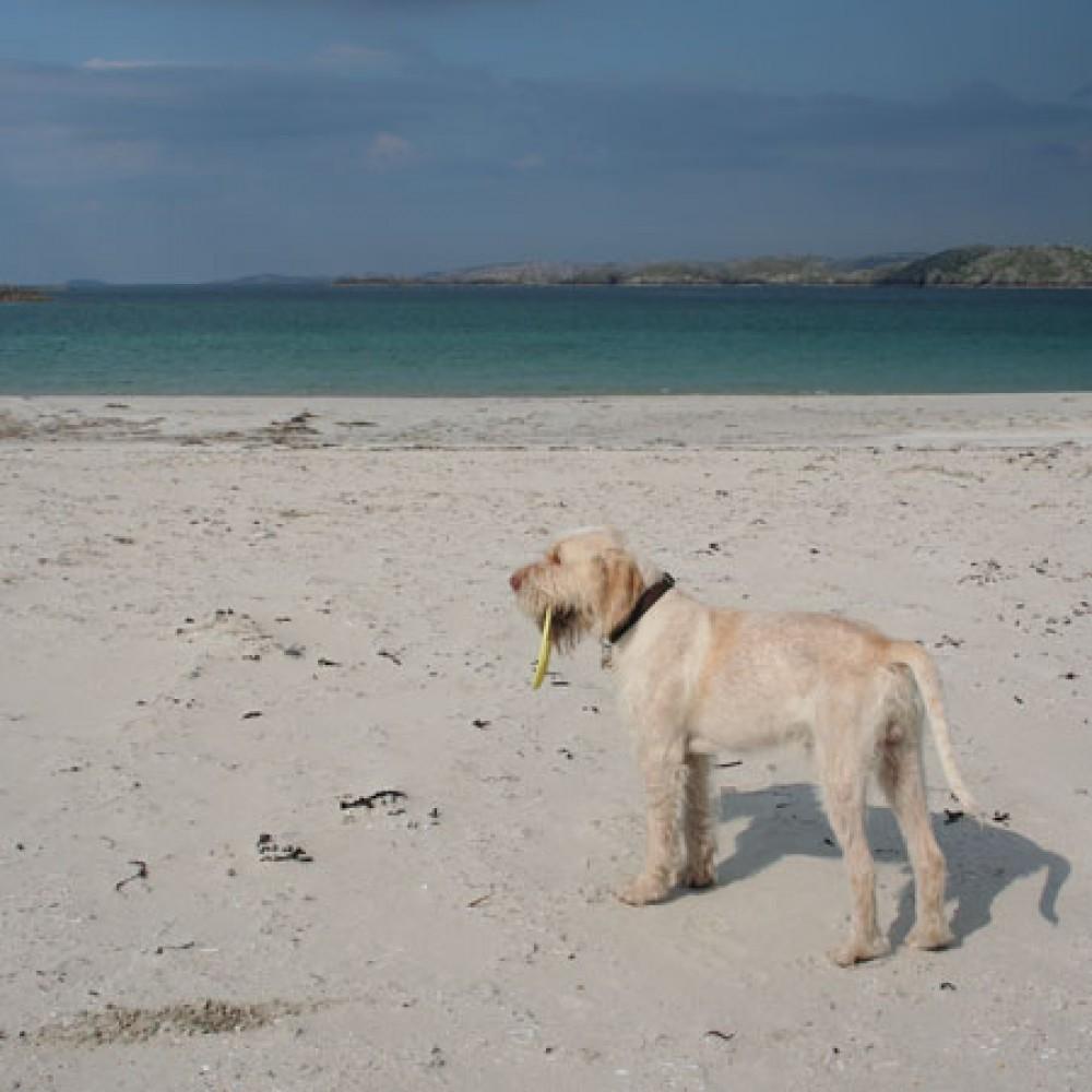 Traigh na Beirigh dog-friendly beach on the Isle of Lewis, Scotland - Dog walks in Scotland