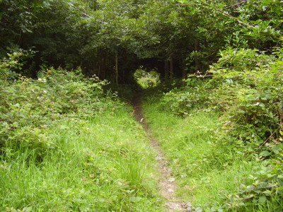 Peaceful woodland dog walk off the A30, Cornwall - Driving with Dogs