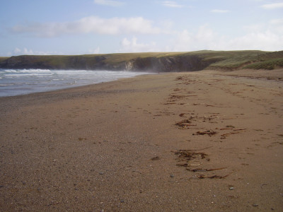 Dog-friendly beach and walkies, Cornwall - Driving with Dogs