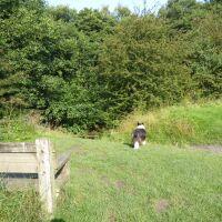 Waterfalls dog walk and dog-friendly pubs, Northumberland - P1030653.JPG