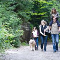 Donadea dog walk, RoI - Dog walks in Ireland