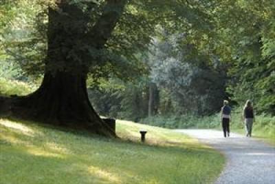 Lakeside dog walk near Bailieborough, RoI - Driving with Dogs