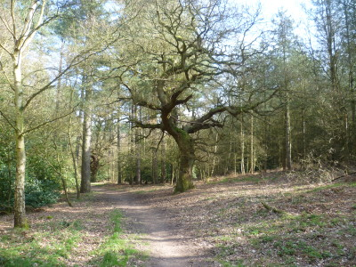 A614 Woodland dog walk near Nottingham, Nottinghamshire - Driving with Dogs