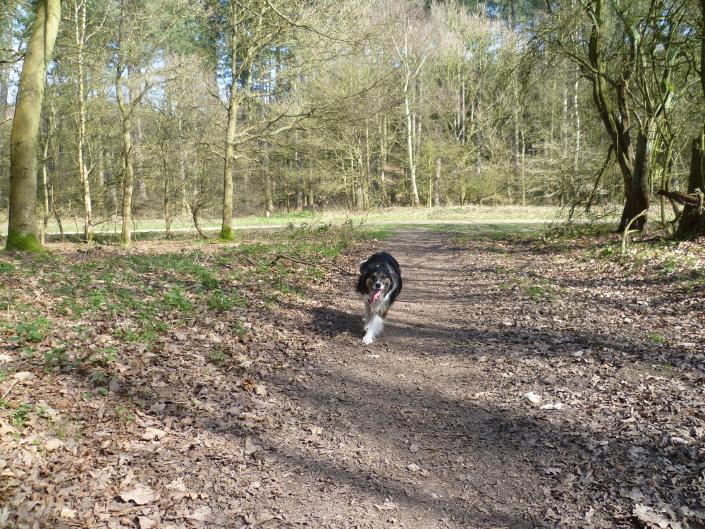 A614 Woodland dog walk near Nottingham, Nottinghamshire - Image 3