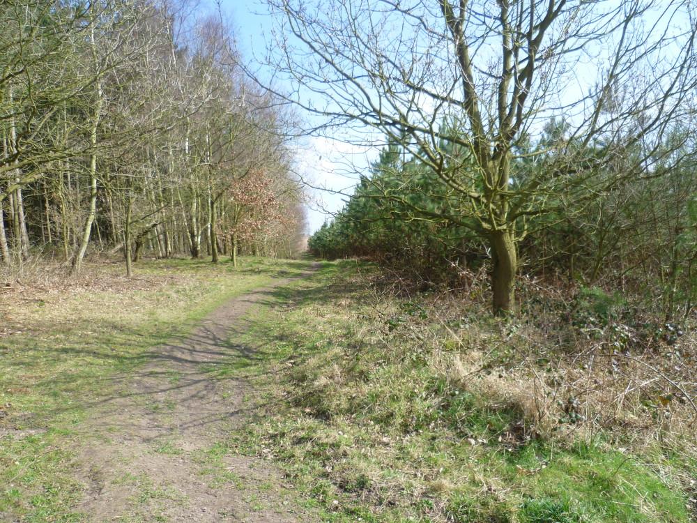 A614 Woodland dog walk near Nottingham, Nottinghamshire - Image 4