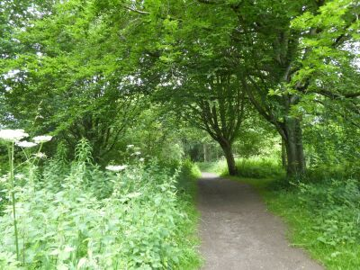 Nature reserve dog walk and swimming by the River Wear, County Durham - Driving with Dogs