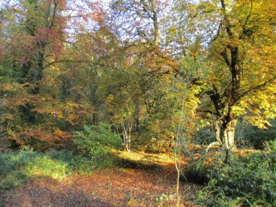 Forest dog walk near Puddletown, Dorset - Driving with Dogs