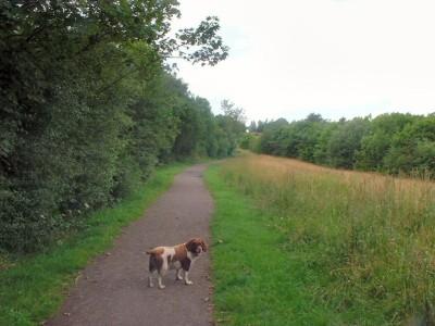Grassmoor dog walk near Chesterfield, Derbyshire - Driving with Dogs
