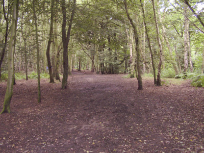Allestree local dog walks, Derbyshire - Driving with Dogs