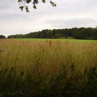 Popular Country Park dog walks near the A1, Nottinghamshire - Dog walks in Nottinghamshire
