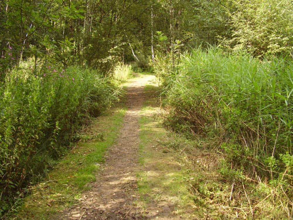 A42 Junction 13 Nature Reserve dog walk, Leicestershire - Dog walks in Leicestershire