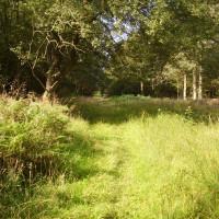 Ryton dog walk with a cafe, Warwickshire - Dog walks in Warwickshire