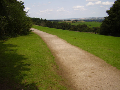 Hartshill Hayes Country Park dog walk, Warwickshire - Driving with Dogs