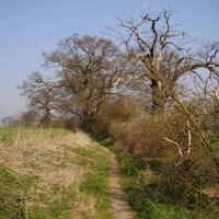 Water Mill dog walk, Hertfordshire