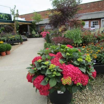 Wistow Rural Centre - dog-friendly shopping, Leicestershire - Driving with Dogs