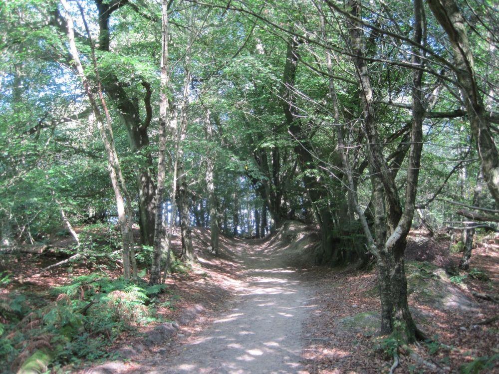 A25 woodland dog walk near Dorking, Surrey - Surrey dog walk