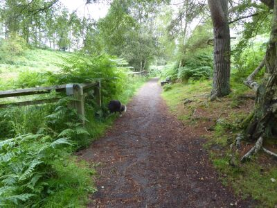 A68 woodland dog walks with lakeside views, County Durham - Driving with Dogs