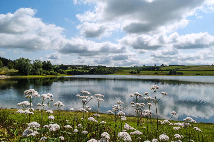 A396 Popular lakeside dog walk and cafe, Somerset - Somerset lakeside dog walk.jpg