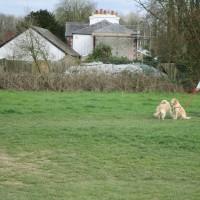 A24 dog walk with views near Dorking, Surrey - Surrey dog-friendly pubs with dog walks.JPG
