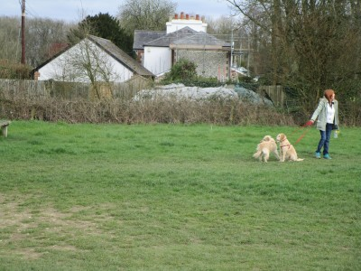 A24 dog walk with views near Dorking, Surrey - Driving with Dogs