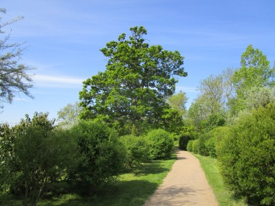 A38 Croome Park dog walks, Worcestershire - Driving with Dogs