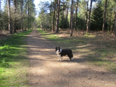 A walk with your dog in royal pawsteps, Norfolk - Driving with Dogs