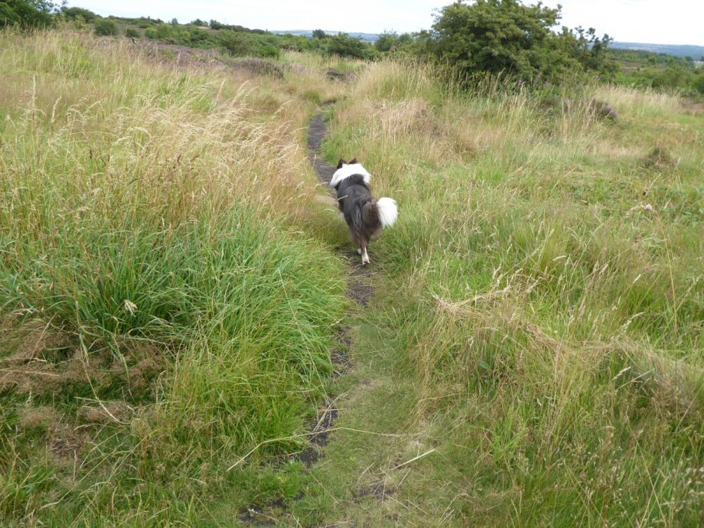 Country park dog walks on the fells, County Durham - Dog walks in County Durham