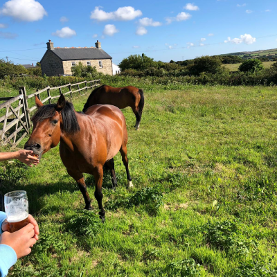 Remote dog-friendly inn with B&B and camping, Cornwall - Driving with Dogs