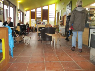 A42 dog-friendly cafe and dog walks near Ashby, Leicestershire - Driving with Dogs