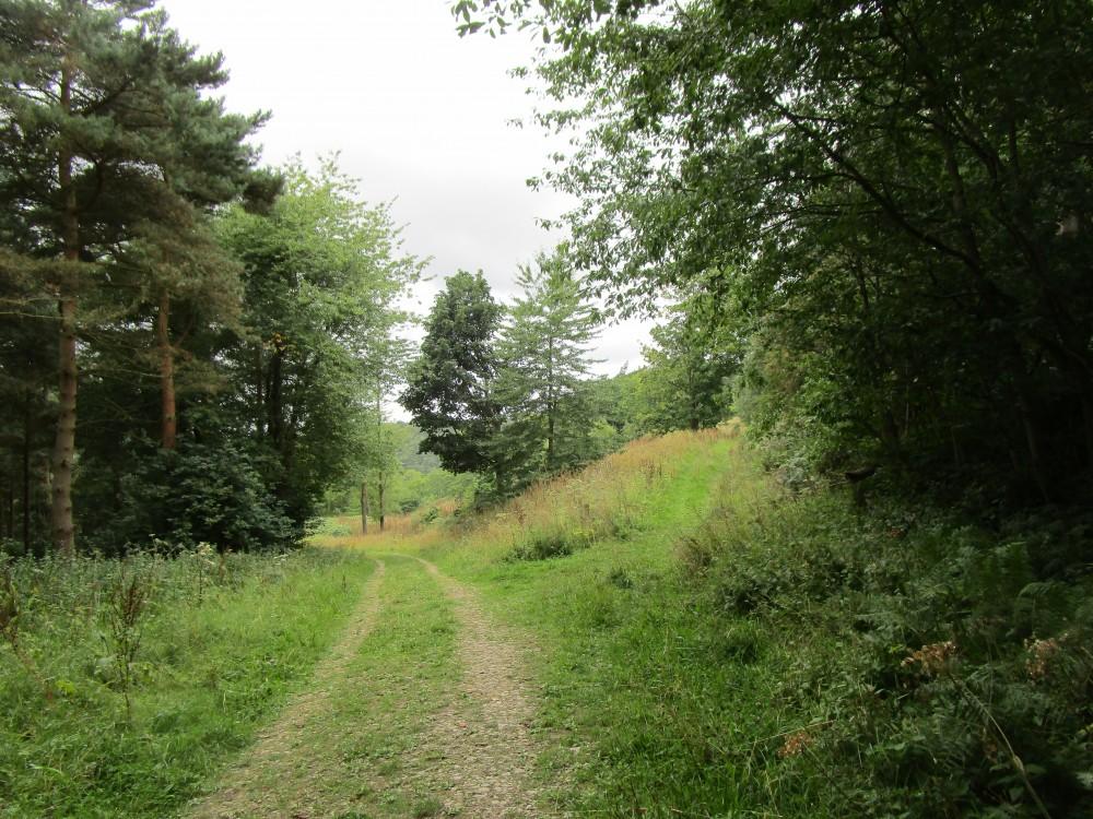 A19 Woodland dog walk and dog-friendly pub, North Yorkshire - Dog walk in Yorkshire