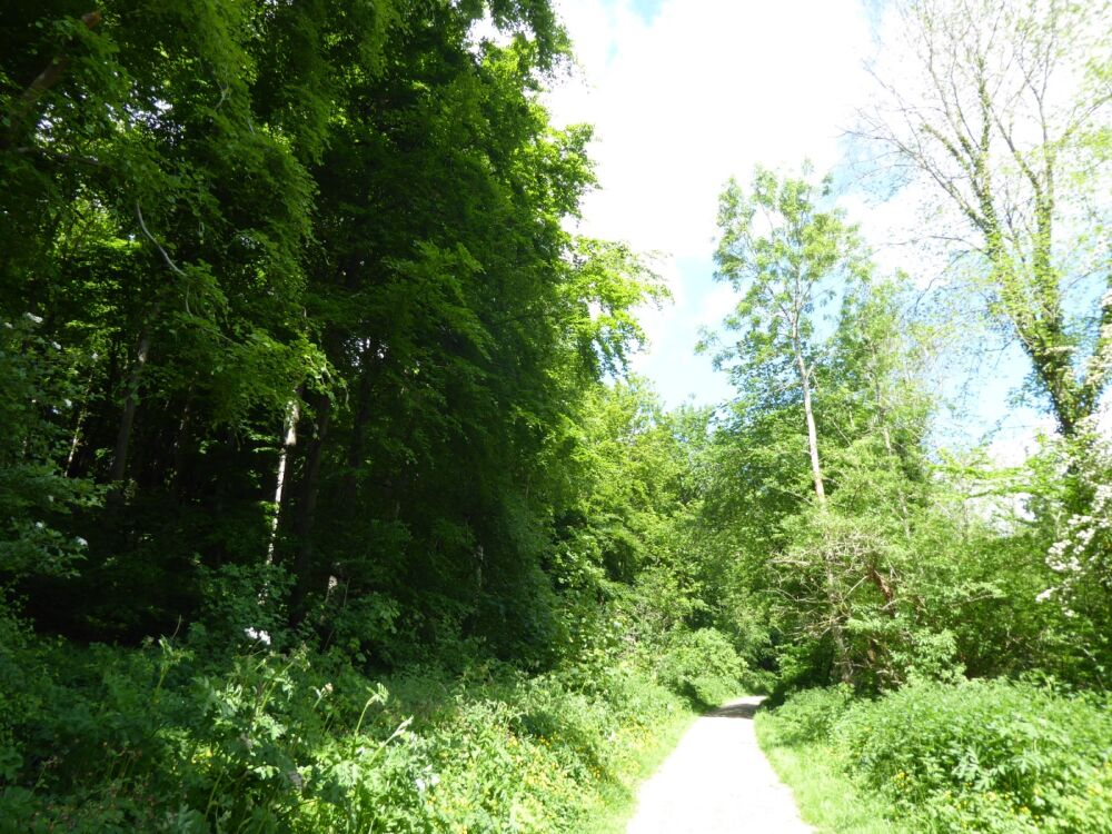 Woodland dog walk and nature trail, East Riding of Yorkshire - Woodland dog walks in Yorkshire