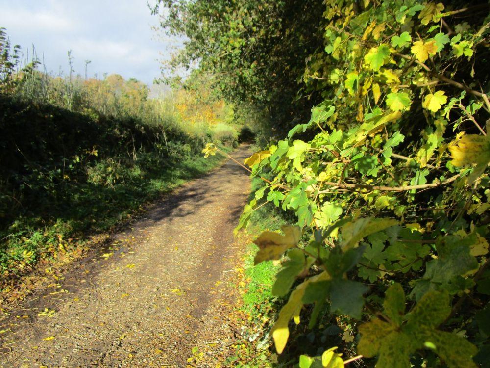 Dog-friendly pub and dog walk near Goring, Oxfordshire - Oxfordshire dog-friendly pub and dog walk