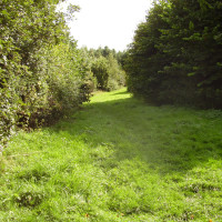 Bug and Wink dog walk near Ashby, Leicestershire - Dog walks in Leicestershire