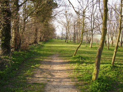 M1 Junction 12 dog walk and dog-friendly pub, Bedfordshire - Driving with Dogs