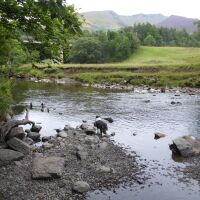 A66 riverside walk and dog swimming, Cumbria - Dog walk and dog swimming near Penrith
