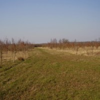 Broughton Grounds dog walk, Buckinghamshire - Dog walks in Buckinghamshire