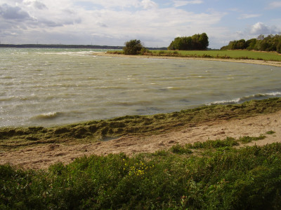 A1 dog walk at Grafham Water Park, Cambridgeshire - Driving with Dogs