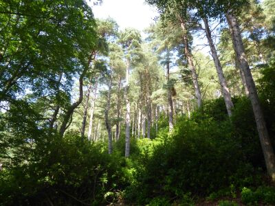 A697 woodland walks and National Trust cafe, Northumberland - Driving with Dogs