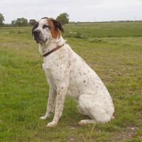 Sutton on Trent dog walk and pub, Nottinghamshire - Dog walks in Nottinghamshire
