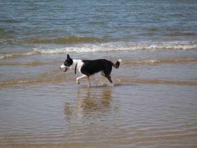 Formby dog-friendly beach, Merseyside - Driving with Dogs