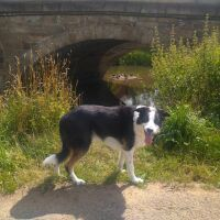 Market Square dog-friendly hotel and bar, North Yorkshire - Yorkshire dog walks from dog-friendly pubs