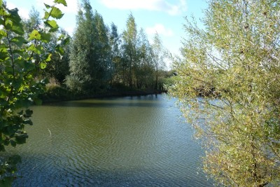 A419 easy dog walk on the Thames path, Wiltshire - Driving with Dogs